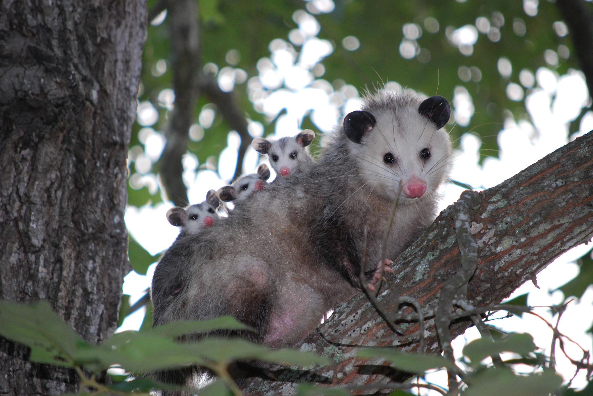 Google Possum Update